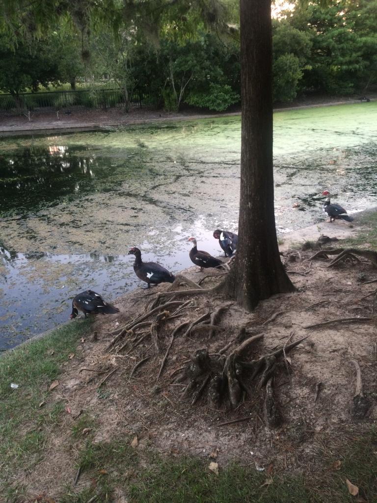 Hermann Park birds