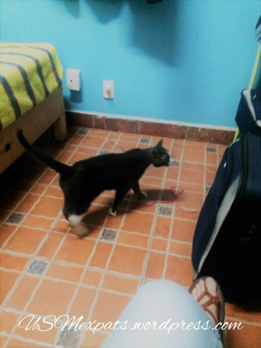 Oscar explores hostel in San Luis Potosi USMexpats