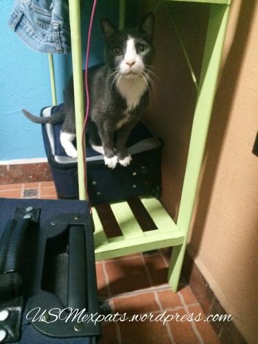 Oscar found his home in San Luis Potosi USMexpats