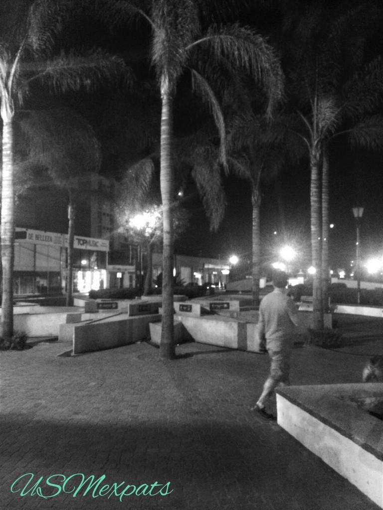 San Luis Potosi palm trees Enrique Charlie USMexpats